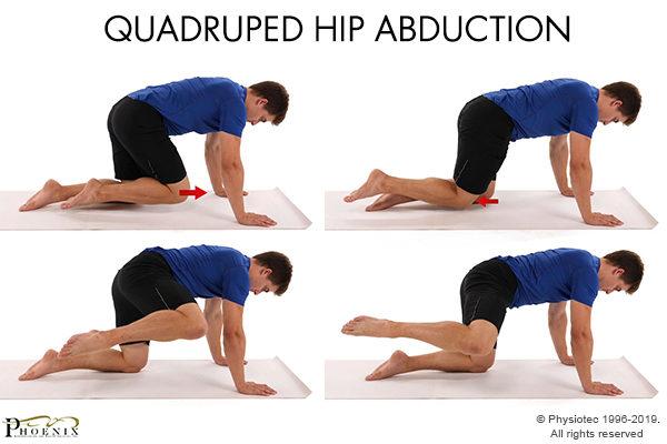 quadruped hip abduction