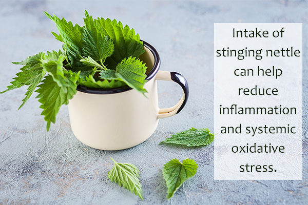 consuming stinging nettle may help reduce inflammation