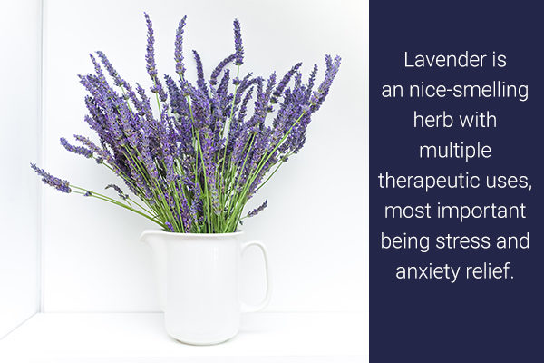 lavender is an easy to grow indoor medicinal herb