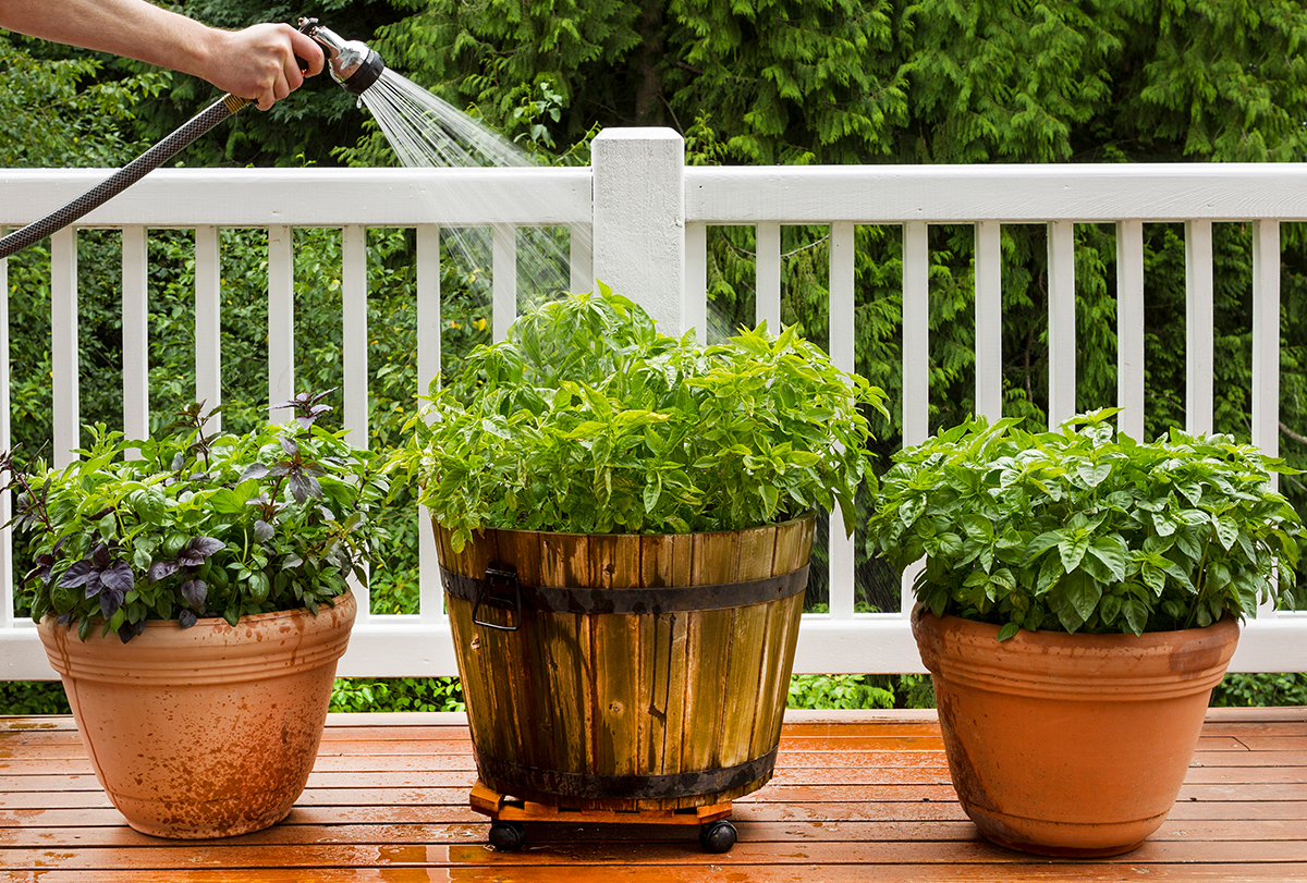 easy-to-grow medicinal herbs