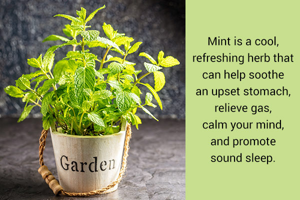 Medicinal herb mint can be grown in home garden