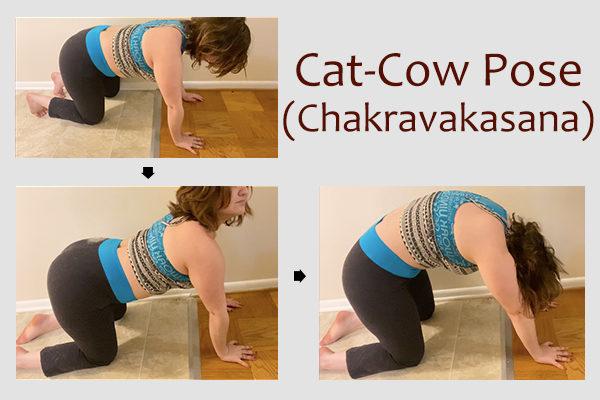 cat-cow yoga pose (chakravakasana)