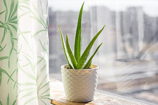 10 Amazing Plants That Promote Positive Energy - eMediHealth