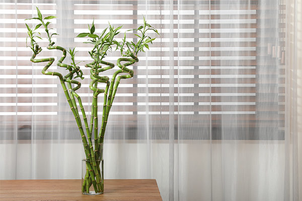 bamboo promotes positive energy and provides many health benefits