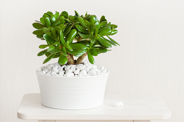 jade promotes positive energy and provides many health benefits