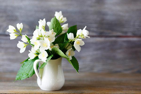 jasmine promotes positive energy and provides many health benefits