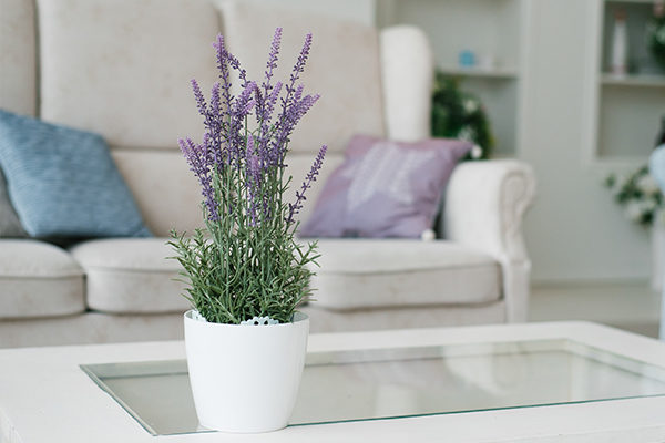 lavender promotes positive energy and provides many health benefits