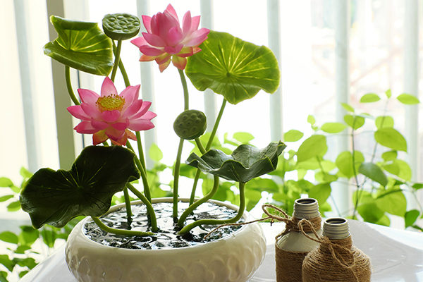 lotus promotes positive energy and provides many health benefits