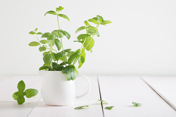 peppermint promotes positive energy and provides many health benefits