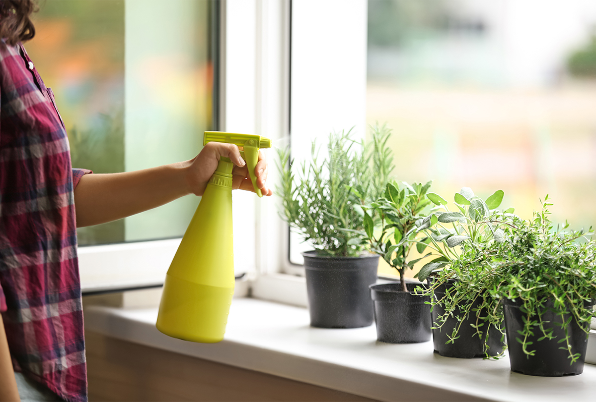 plants that promote positive energy