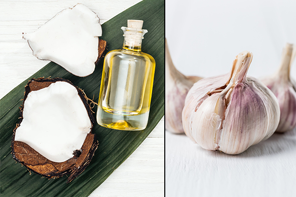usage of coconut oil and garlic can help prevent vaginal thrush