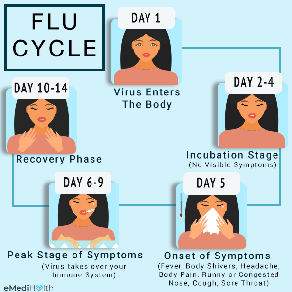 the flu cycle