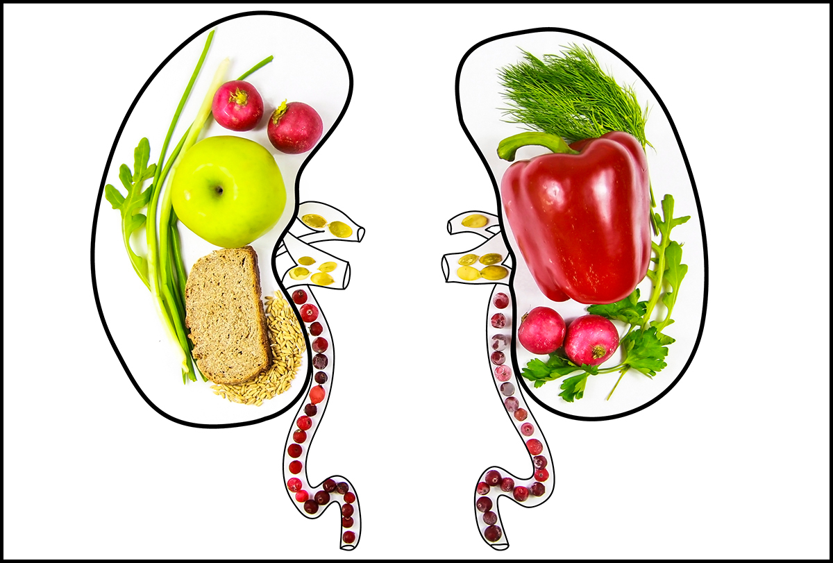 foods beneficial for kidney health