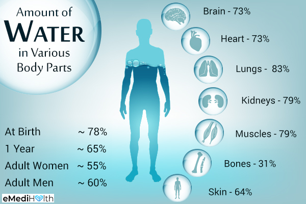 importance of water for the human body