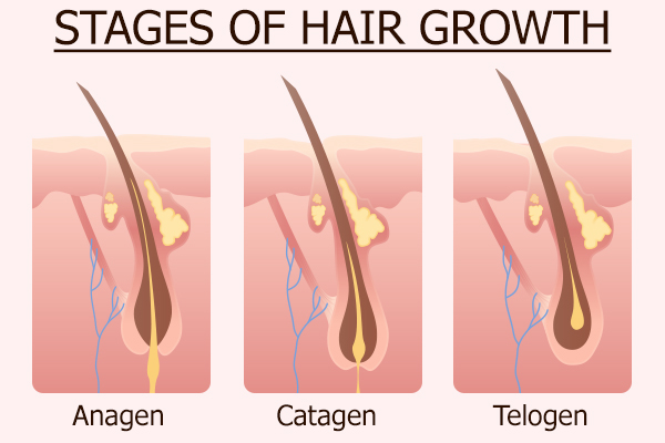stages of hair growth