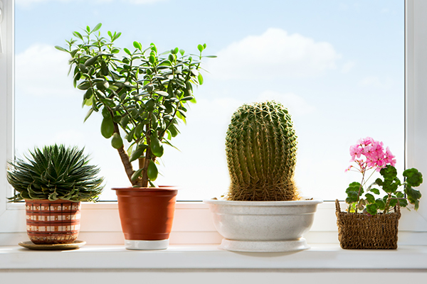 plants that can promote positive energy