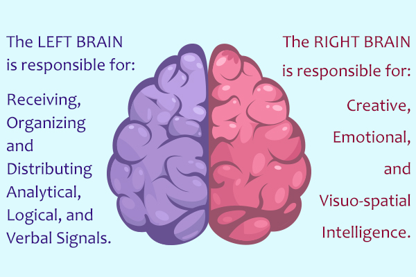 the two sides of the brain