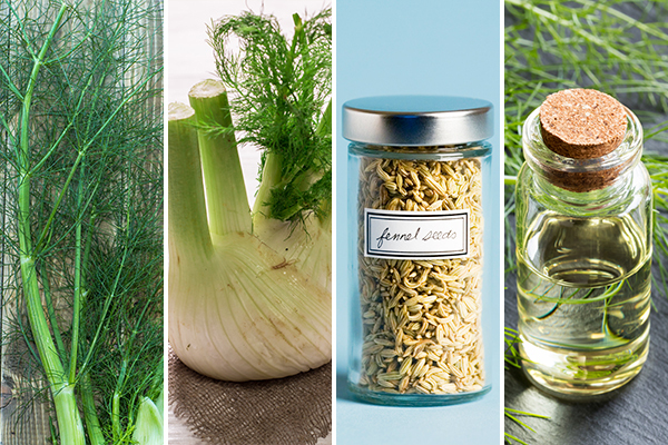 processing and storage of fennel
