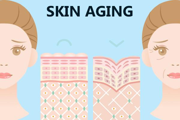skin aging indicators