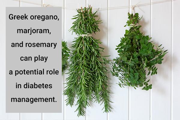 different origanum species help manage blood sugar