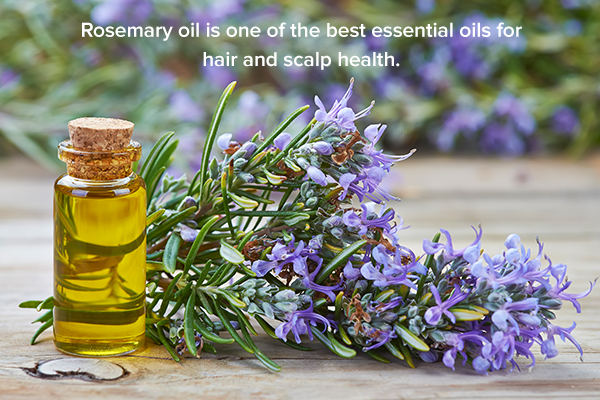 rosemary oil is beneficial for hair health