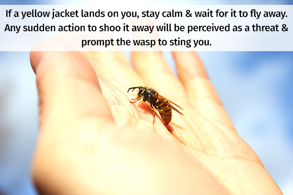measures to prevent getting stinged by yellow jacket wasp