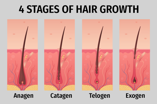 different phases of hair growth