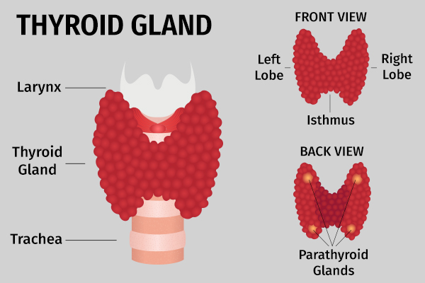 how does thyroid disorder induces hair loss?