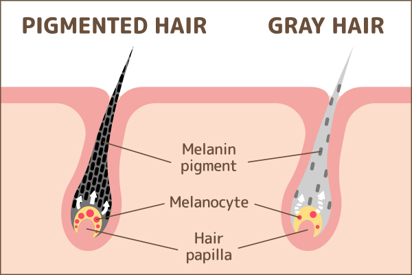 role of melanin in hair health