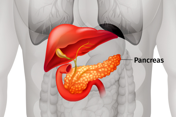 role of pancreas in the human body
