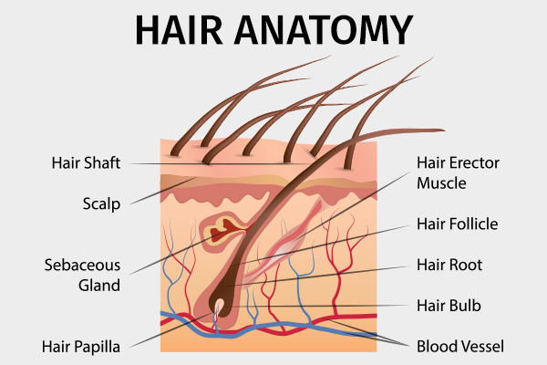 symptoms and signs of damage in hair follicles