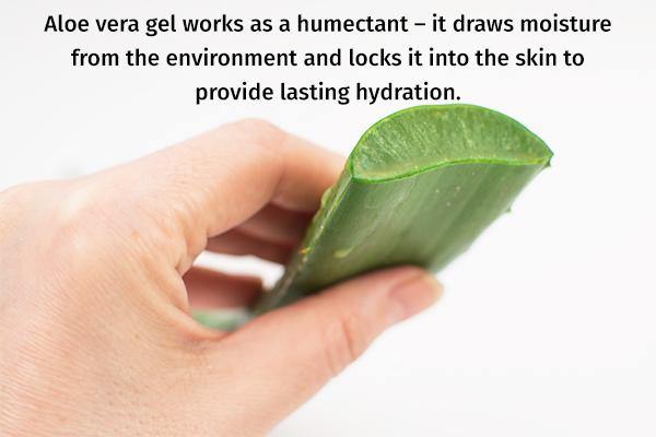 aloe vera gel can help moisturize and repair your skin