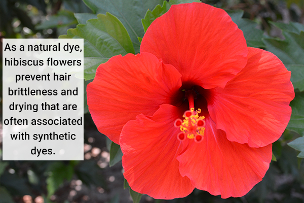 hibiscus flowers can be used as a natural hair dye