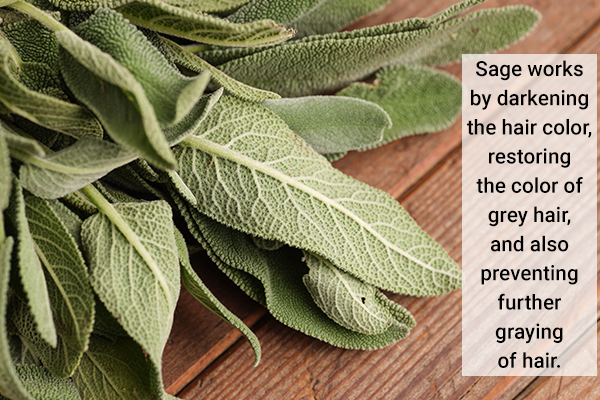 sage helps darken the hair color and prevents graying