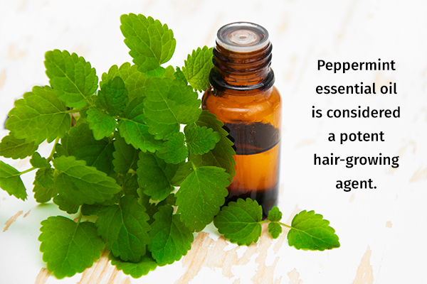 peppermint essential oil can help in hair growth