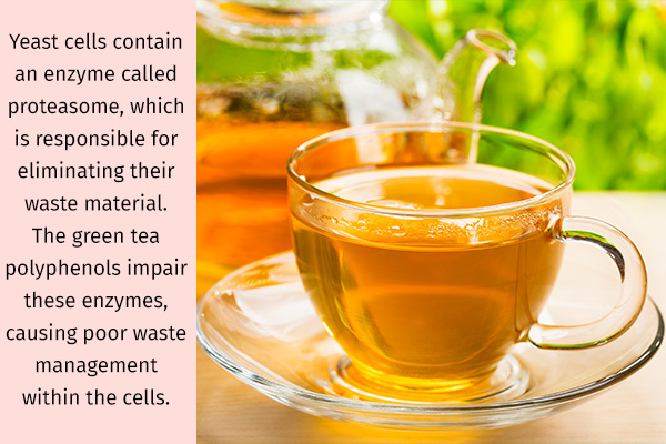 green tea can be beneficial for managing yeast infections