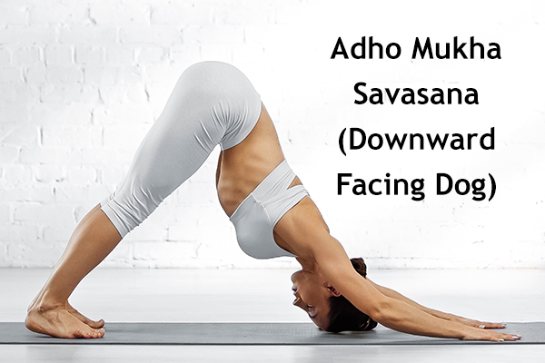 adho mukha savasana (downward facing dog)