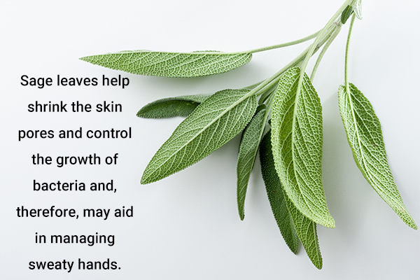 sage leaves usage can help manage sweaty hands